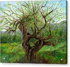 Old Apple Tree Acrylic Print