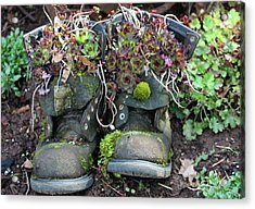 Old Boots New Purpose Acrylic Print by Kami McKeon