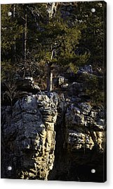 Acrylic Print featuring the photograph Old Cedar Buffalo National River by Michael Dougherty