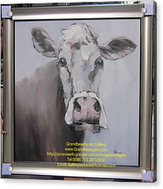 Old Cow Acrylic Print by Darren