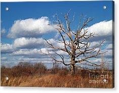 Old Dead Tree Acrylic Print