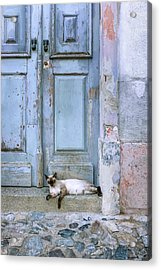 Old Door With Cat Acrylic Print