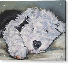 Old English Sheepdog Pup Acrylic Print by Lee Ann Shepard