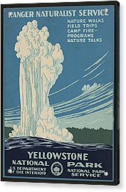 Old Faithful At Yellowstone Acrylic Print by Unknown