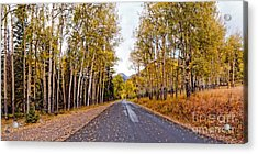 Old Fall River Road With Changing Aspens - Rocky Mountain National Park - Estes Park Colorado Acrylic Print