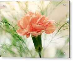 Acrylic Print featuring the photograph Old Fashion by Corinne Rhode