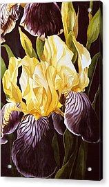 Old Fashion Iris Acrylic Print