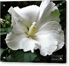 Old Fashioned Flower Acrylic Print