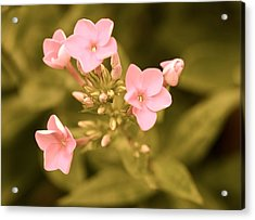 Acrylic Print featuring the photograph Old Fashioned Spring by Corinne Rhode