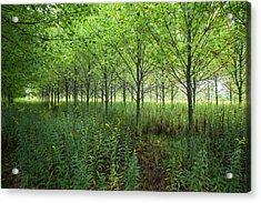 Acrylic Print featuring the photograph Old Field Sentinels by Lon Dittrick