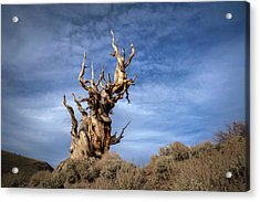 Acrylic Print featuring the photograph Old Friend by Sean Foster