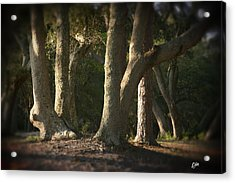 Acrylic Print featuring the photograph Old Friends Meet In The Woods by Phil Mancuso