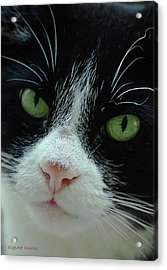 Old Green Eyes Acrylic Print by DigiArt Diaries by Vicky B Fuller
