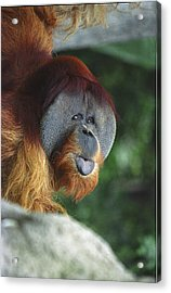 Old Man Of The Forest Acrylic Print