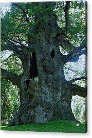 Old Man Tree Acrylic Print by Digital Art Cafe