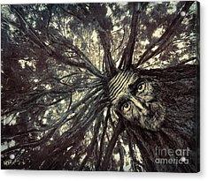 Old Man Tree Acrylic Print