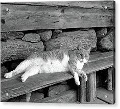 Old Mill Cat Acrylic Print