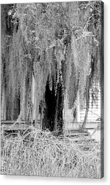 Old Moss Down Home Acrylic Print