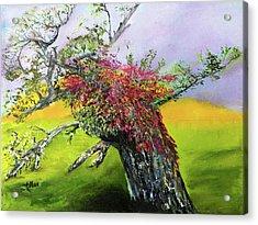 Old Nantucket Tree Acrylic Print