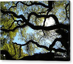 Old Oak Acrylic Print by JoAnn Wheeler