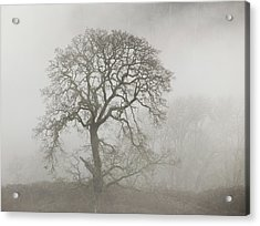 Acrylic Print featuring the photograph Old Oak Tree And Fog by Angie Vogel