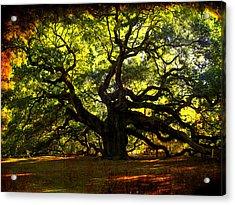 Old Old Angel Oak In Charleston Acrylic Print by Susanne Van Hulst