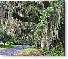 Old Plantation Road Acrylic Print