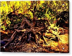Old Roots Acrylic Print by Aron Chervin