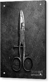Old Scissors Acrylic Print