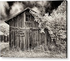 Acrylic Print featuring the photograph Old Shed In Sepia by Greg Nyquist