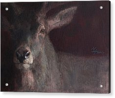 Old Stag Acrylic Print