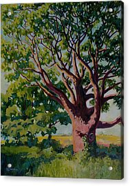 Old Tree Acrylic Print by Andrew Danielsen