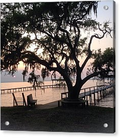 Old Tree At The Dock Acrylic Print