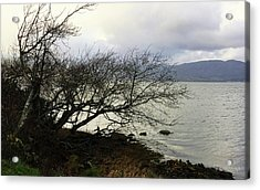 Acrylic Print featuring the photograph Old Tree By The Bay by Chriss Pagani