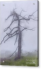 Old Tree In Fog In The Blue Ridge Ap Acrylic Print