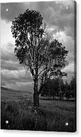 Old Tree, Lost Trail Wildlife Refuge Acrylic Print