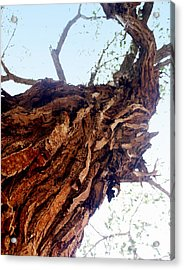 Old Tree Acrylic Print by Marty Koch