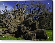 Old Tree Roots Acrylic Print by Garry Gay