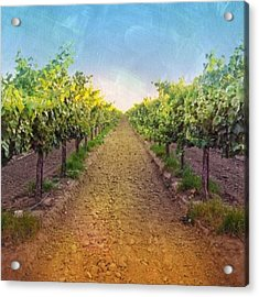Old #vineyard Photo I Rescued From My Acrylic Print