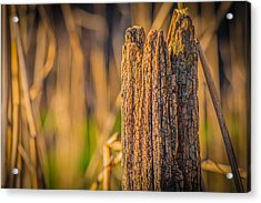 Old Weathered Fence Post Acrylic Print