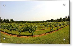 Old York Winery Acrylic Print by Brian Manfra