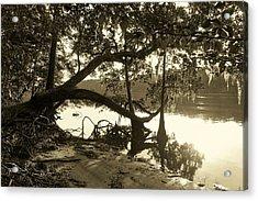 Ole Suwannee River Acrylic Print by Sheri McLeroy