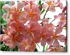 Acrylic Print featuring the photograph Oleander Dr. Ragioneri 4 by Wilhelm Hufnagl