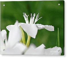 Acrylic Print featuring the photograph Oleander Ed Barr 1 by Wilhelm Hufnagl
