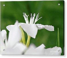 Oleander Ed Barr 1 Acrylic Print