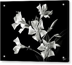 Oleander In Black And White Acrylic Print by Endre Balogh