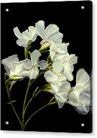 Oleander Acrylic Print by Kurt Van Wagner