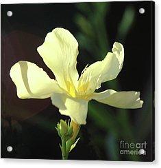 Oleander Marie Gambetta 1 Acrylic Print