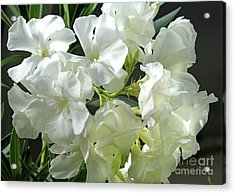 Oleander Mont Blanc 2 Acrylic Print