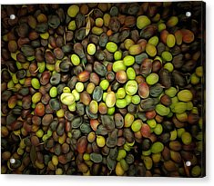 Olive Art Acrylic Print by Dorothy Berry-Lound